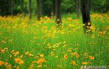 春天來了,無錫有這麼多免費公園,還不踏春去?