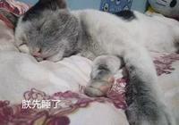 貓咪消失了好幾天,回來後就悶頭大睡:是熬了三天夜打遊戲的我