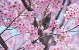 劉若英素顏 賞花