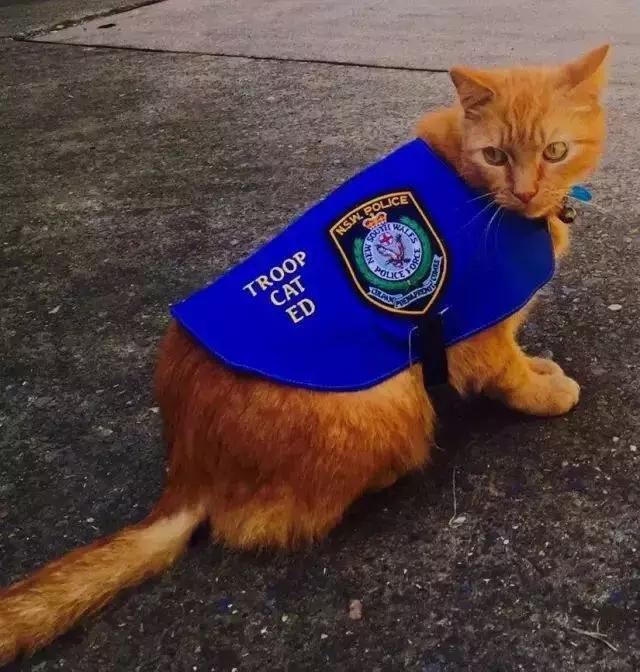 混上警員編制後,這隻警貓開始不務正業,整天…