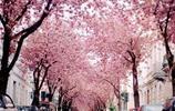 世界最美的10棵樹,中國僅佔兩顆