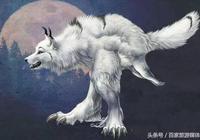 人們常說狼狽為奸,那麼你知道狽是一種什麼動物嗎?