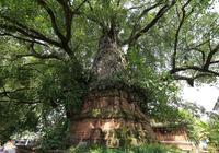 菩提樹的故事