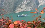 長江三峽紅葉已進入最佳觀賞期,滿山紅葉似彩霞