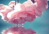 花滿春枝 天心月圓
