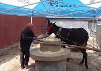 山丹農村的驢