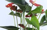 入冬後,家裡放這6個盆栽,滿屋飄香又耐看,鄰居來了都不回家