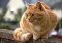 貓是否知道自己是貓呢?