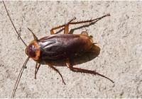 蟑螂藥根本不用買,只需一個紙板,一隻蟑螂都沒有,果然是好方法