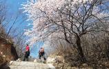 杏花成海!驢友徒步長城古城堡蓮花山,最美的風景在戶外
