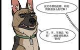 萌翻了:小奶貓與退役軍犬之《丫頭,你怎麼就不明白呢》,第22集