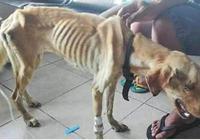 狗狗被扔進下水道,靠吃垃圾為生,樣子使人憐憫