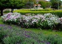 華龍網攝友重慶慶人在澳洲作品:春天花開