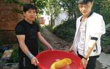 長江同一水域釣起兩條罕見金黃色大口鯰魚 上一條以10000元售出
