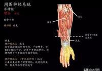 """北京協和醫院這套""""神操""""火了,4個動作讓大腦反應更快"""