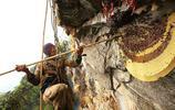 採蜂人冒險在懸崖採蜜,他採的蜂蜜不愁賣,幾百塊一斤都有人買