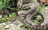 這些毒蛇比歐陽鋒還毒