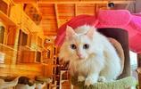 和小么 :我哥住貓公館了,有點想他~剛才他在院子裡喊我麼?