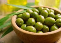 小小一枚橄欖果,等於六種治病方,調理好呼吸道疾病!