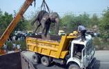 卡車行駛途中突遇大象,司機反應不及時造成遺憾後果