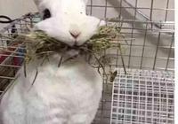 想給兔子換個吃的,結果兔子以為沒得吃了,叼著最後的口糧不鬆口