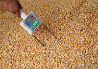 玉米價格下行趨勢明顯,價格下降的原因有哪些?後半年的玉米行情會如何發展?