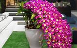 最適合擺放在家裡的精美盆栽,論淨化空氣我只服它