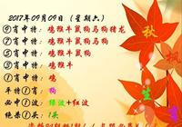 106期秋楓劉半仙啞謎