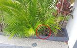 家中花園隱藏一條巨蛇 居民受到了驚嚇 你能發現嗎?
