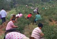 給你300一天,你願意回農村去種地嗎?為什麼?