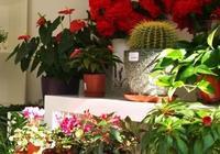 如何選擇家裡適合養的花,喜歡花草的人一定要看,漲見識了