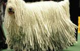 國內24大被家庭禁養的犬種,中華田園犬也上榜,你養了嗎?