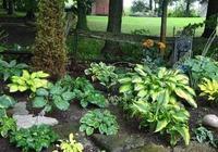 背陰的院子里布置一片耐陰植物花境,除了玉簪花,你還會選什麼?