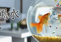 家居風水篇之——養魚風水
