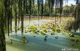 昆明翠湖公園秋日美景實拍:紅嘴鷗還沒來,但是已經有最美的風景