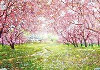 唯美!詩聖這樣讚美十里桃花,杜甫描寫春天桃花的古詩詞經典名句
