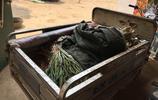 圖說菏澤:菏澤老農種的這些蔥,沒趕上賣菜的好時候,這段時間天天趕集,一上午卻只能賣幾十塊錢