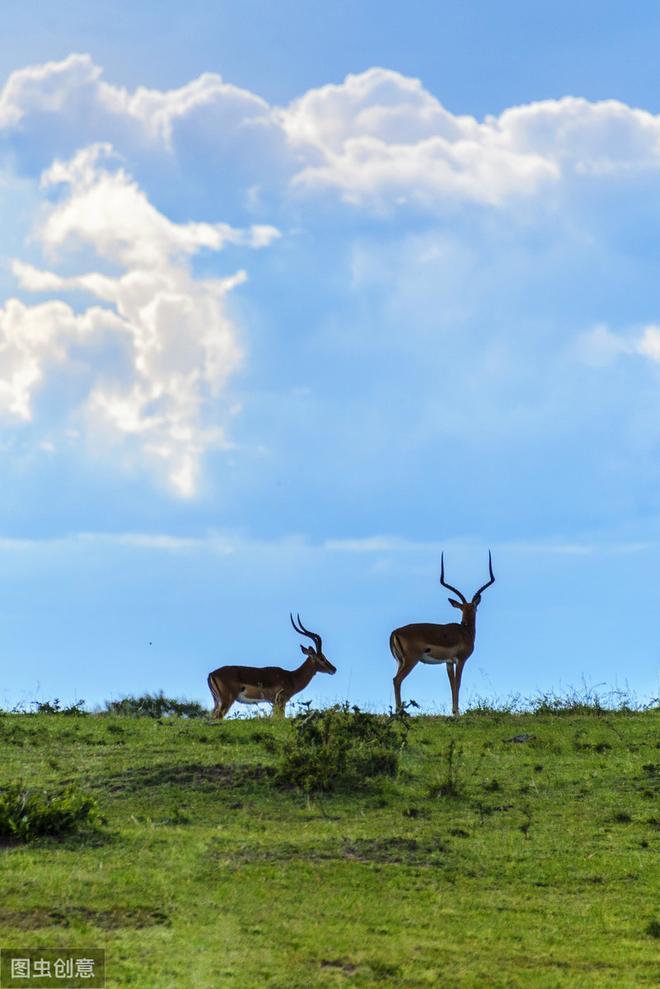 草原上的羚羊