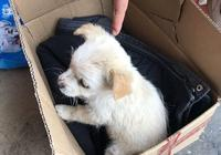 流浪小奶狗蜷縮在紙箱,第一次出門就被主人遺棄,讓人心疼