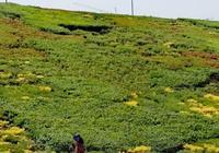 山坡上的小草