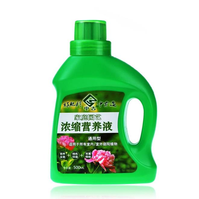 2盆綠蘿,放陽臺黃焉焉,放臥室綠油油,什麼讓它差別這麼打