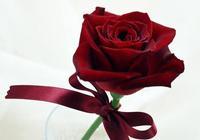 玫瑰rose