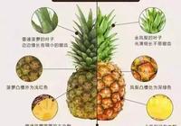 你知道椰果是細菌產生的嗎