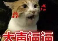 貓咪生氣會有什麼表現?我要怎麼哄它呢?