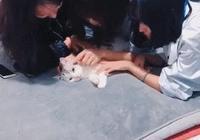 當你有了貓以後,你的朋友就會……貓:鏟屎的救我,我快不行了