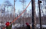 過去林業職工掛在嘴邊的話,為什麼現在沒人提了?要是提你懂嗎?