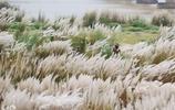 印度阿杰伊河岸開出驚異白花引眾人圍觀,為何女牧童卻頻繁消失?