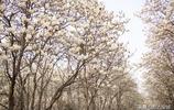 三月賞花何必下江南,濟南春天百花齊放,幾處賞花地讓人心曠神怡