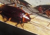 天氣一熱,家裡蟑螂多又髒又煩人,瞧下圖這麼弄,蟑螂不進你家門