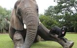 攝影 | 15種不同尋常的動物友誼會融化你的心靈